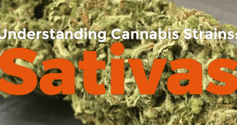 Understanding Cannabis Strains: Sativas