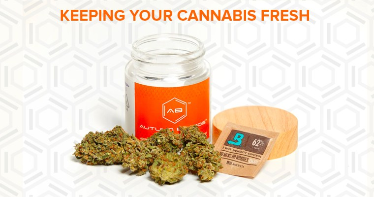 Keeping Your Cannabis Fresh
