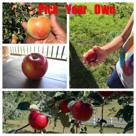 Autumn Harvest Orchard Apple Picking Collage1