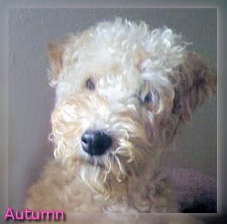 About Autumn!