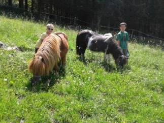 Balade à poney, randonnée à cheval Vollore Montagne Puy de Dôme Auvergne