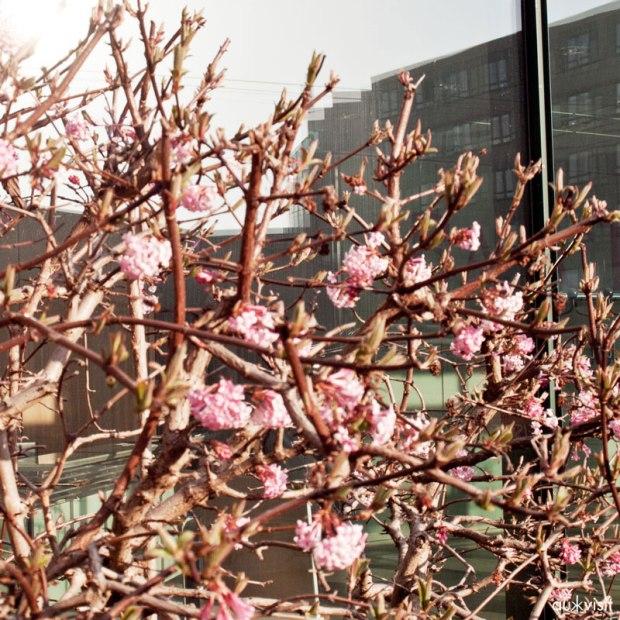 Frühling: wenn sich Schönes vor Grässlichem breit macht.