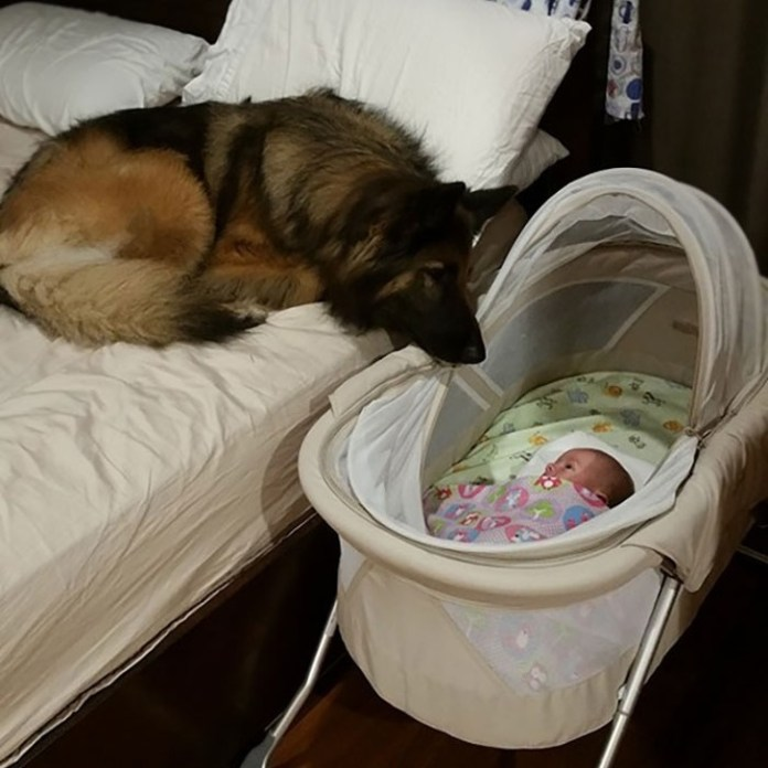 cute dog with cute baby