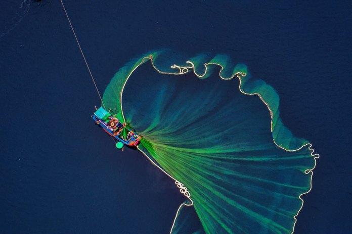 Harvesting Shrimp