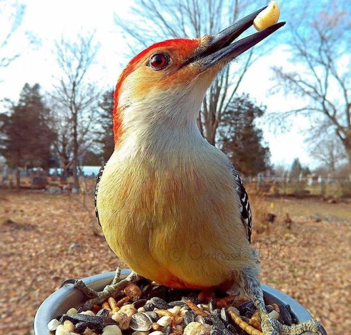 bird eating nuts