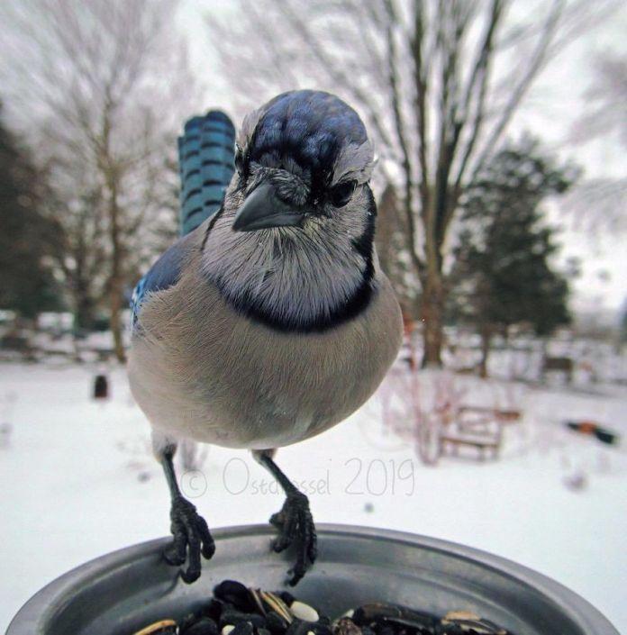 bird on food stand