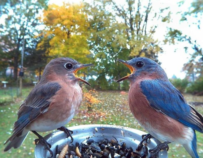 talking birds