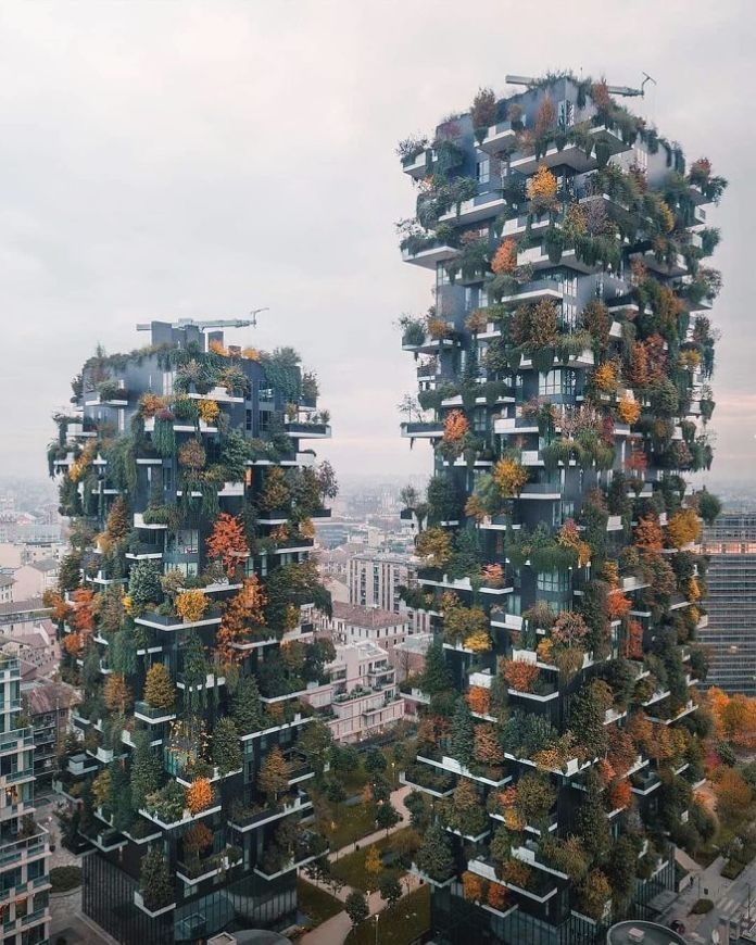 trees on buildings