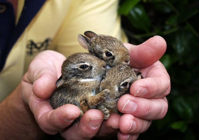 three little bunnies in hand