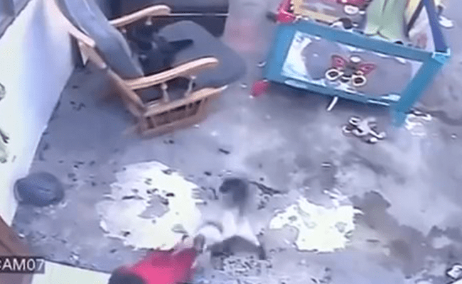 Video Shows Cat Sprinting Over And Saving Baby Who Was