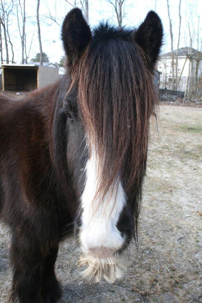The shinny hair horse