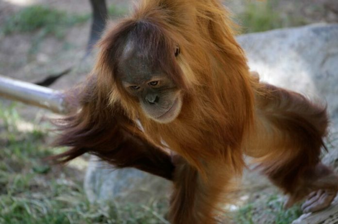 Zoo Animals Are Feeling 'Lonely' Without Visitors, Keepers Say