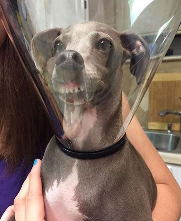 This dog looks uncomfortable