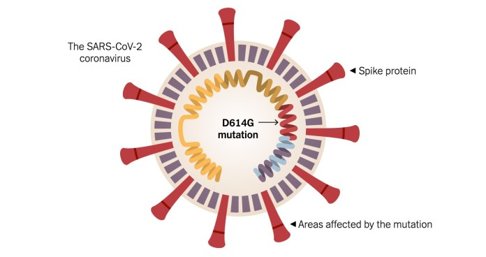 COVID-19 new strain