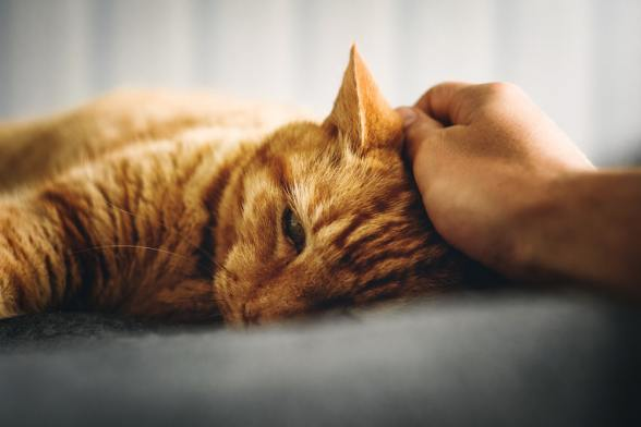 How To Stop Cat Aggression