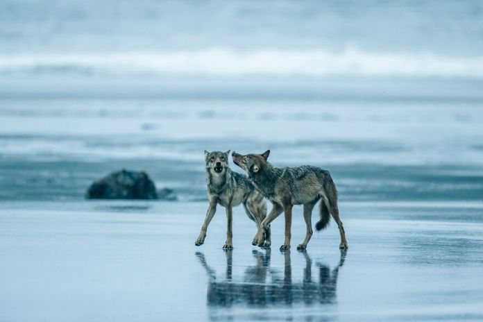 oceanphotographyawards