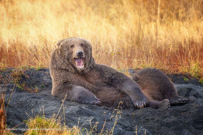 Comedy wildlife photo 2021