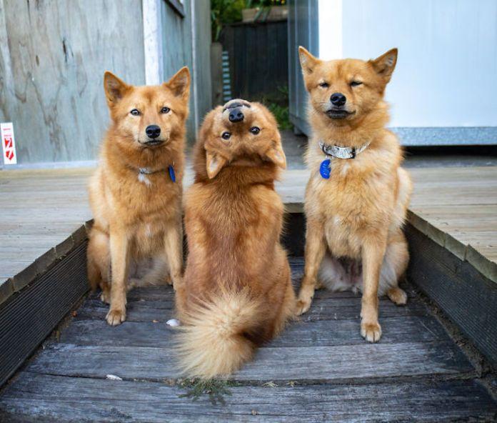 Kiko The Dog