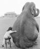 Elephant_Talk