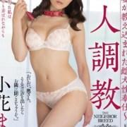 小花真奈美 av女優