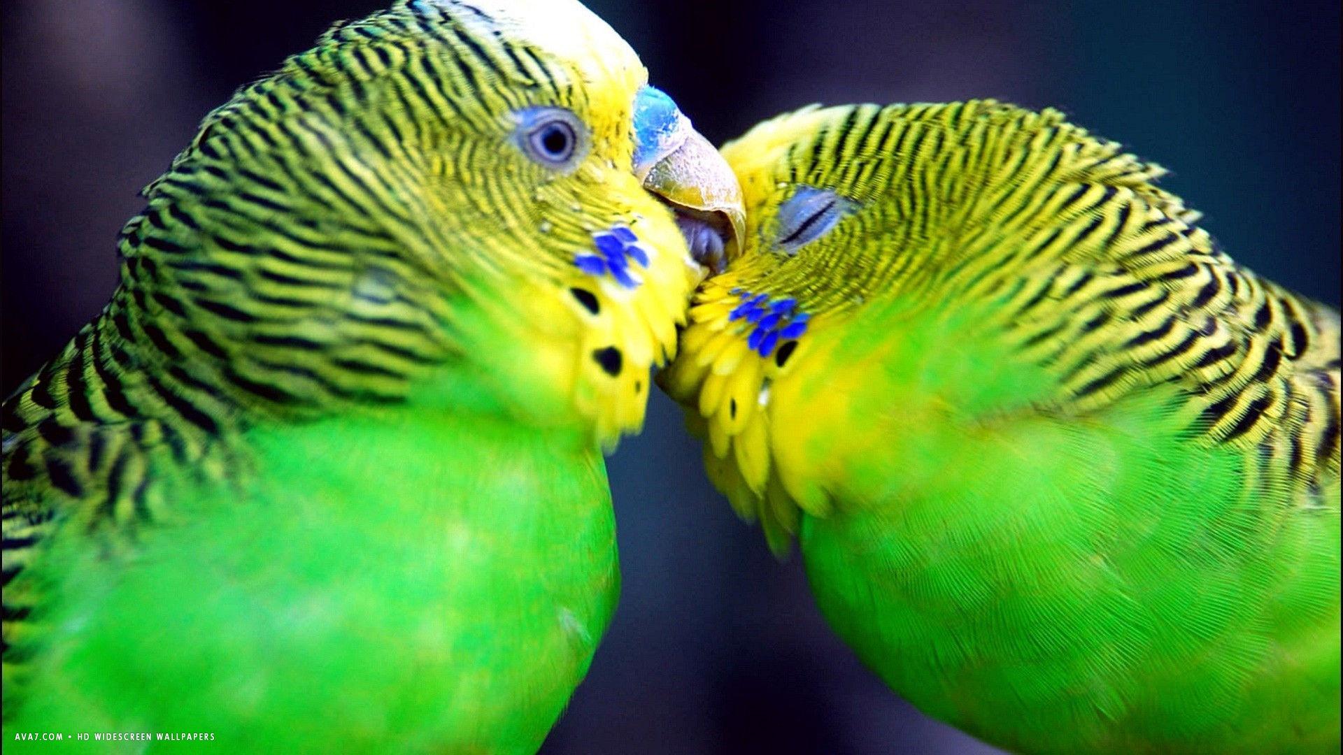 budgie cute romantic green