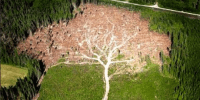 http://www.avaaz.org/en/save_the_amazon/?cl=1127338113&v=9435
