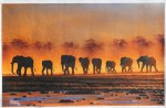 African Animals on Sunset