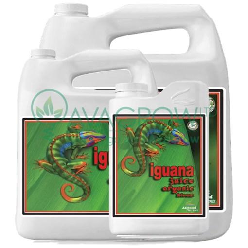 Iguana Juice Bloom Family