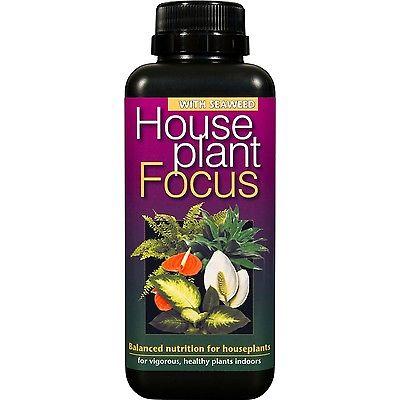 House Plant Focus