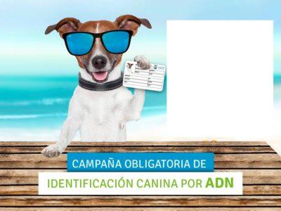 Petició de l'Associació Veïnal sobre els gossos