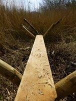 Prehistoric footprints...