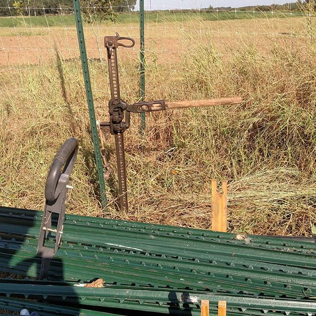 Favorite tool of the day: Farm Jack. No farm should be without one. Here we've been using it to pull up tposts that were used for a tomato trellis all summer.