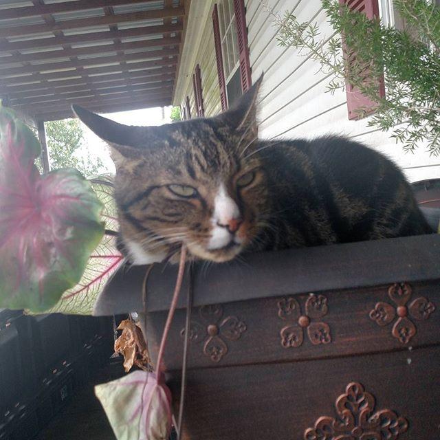 I hates hurricanes! Cat-igory 1 hates being wet.