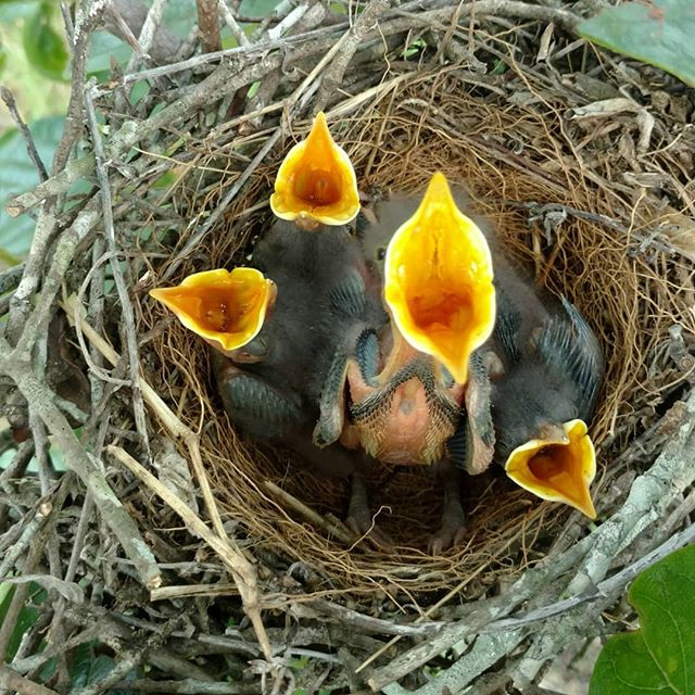 Remember those eggs from a few days ago? Wonder Bird Power Activate!!! Pooof!!! Baby birds 😀