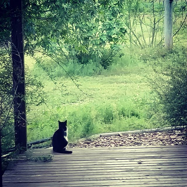 So, what do farm cats ponder about when they aren't doing farm cat things.....? . Apparently this is the prime spot for critter thinking on the farm. 🤔 See our post from March 21st 🤣 . .
