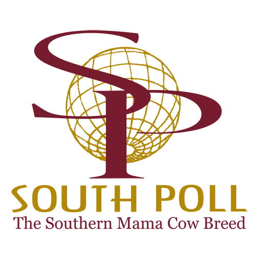 South Poll Grass Cattle Association | WordPress Website Design by Avalon Web Designs
