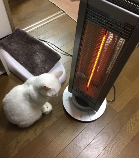 猫を待ちながら、真面目に考えてみた