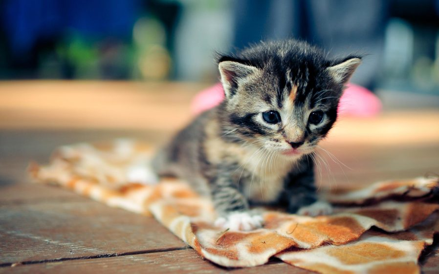 Cat Mobile Wallpapers (16 Wallpapers)  Adorable Wallpapers