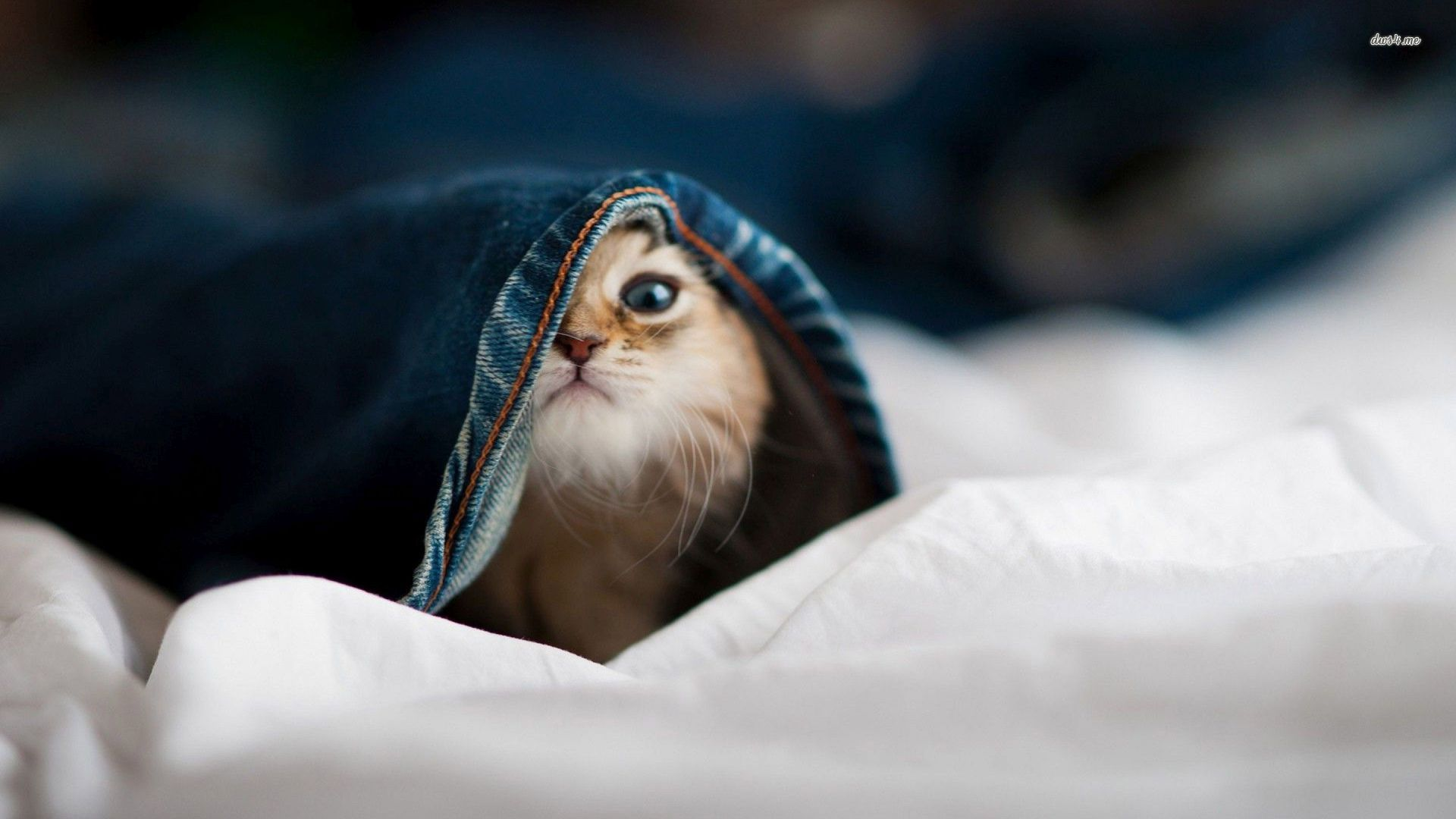 cute baby cats wallpapers (39 wallpapers) – adorable wallpapers