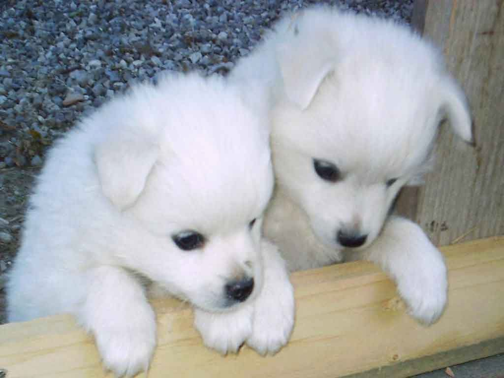cute puppies wallpapers hd
