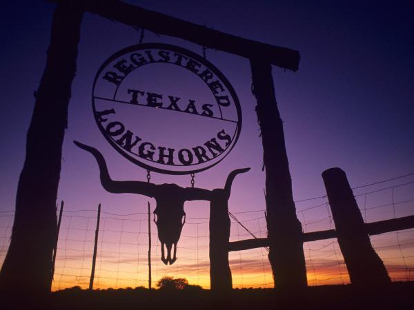 Texas Longhorns Iphone Wallpaper Imgurl