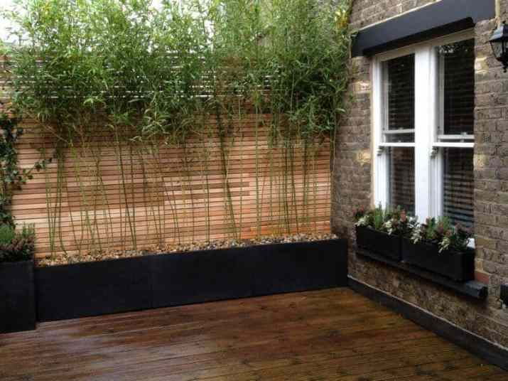 Bamboo Plants on a Raised Bed