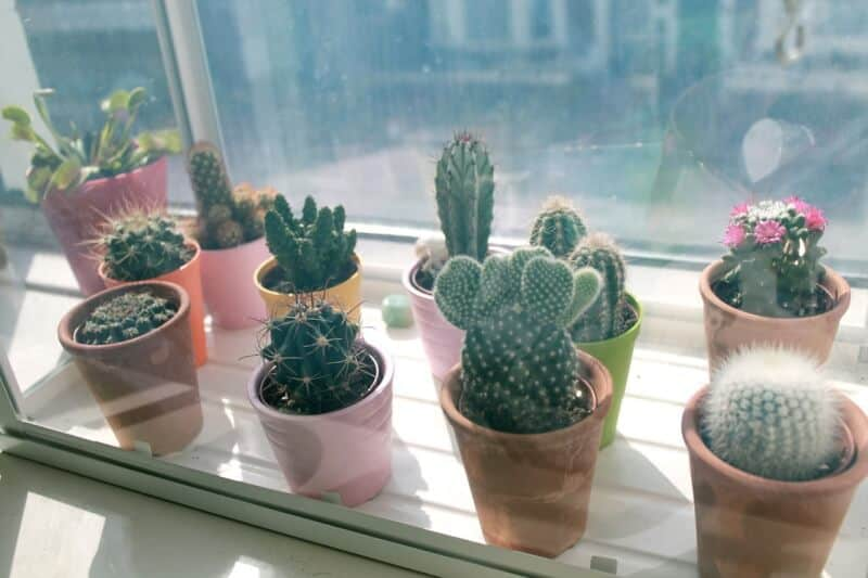 Here Are 20 Types of Cactus You Can Plant Indoor and Outdoor