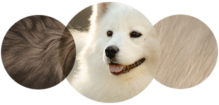 Dog allergies treatment - Dog allergy testing - South Shore Montreal ...
