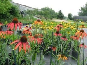 Avant's mobile nursery offers beautiful perennials, grown locally