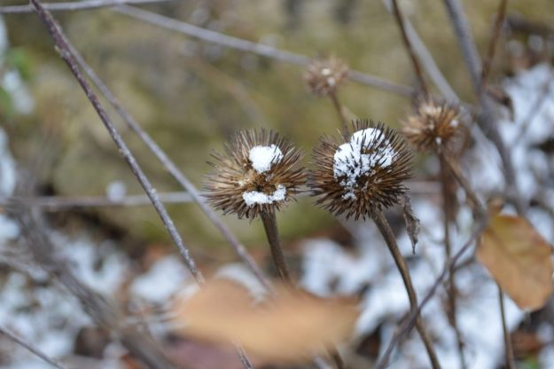Landscaping Madison Wisconsin Winter Landscape Seed Heads