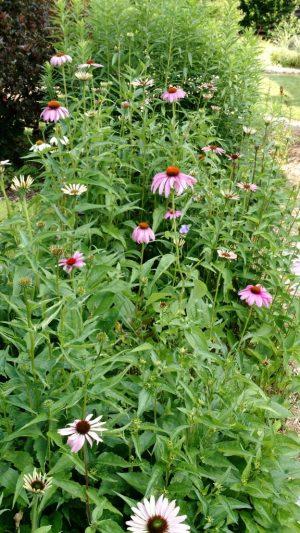 garden design landscape madison middleton wisconsin