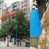tree colaps1