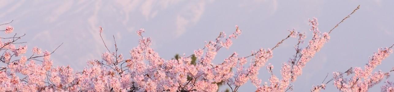 Cute Sakura Wallpaper Текстура Для обложки в вк Avatan Plus
