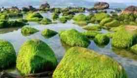 Rạn Nam Ô, Đà Nẵng – ghềnh đá thích hợp để checkin hè này